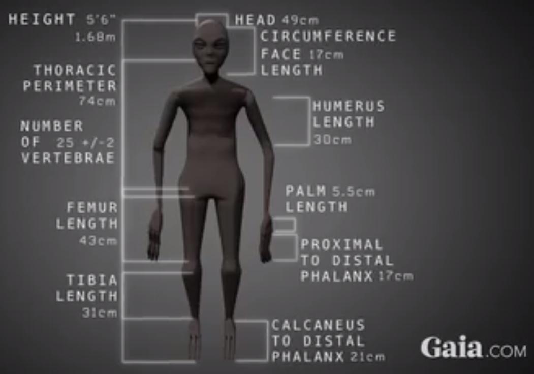 Nazca mummy upright
