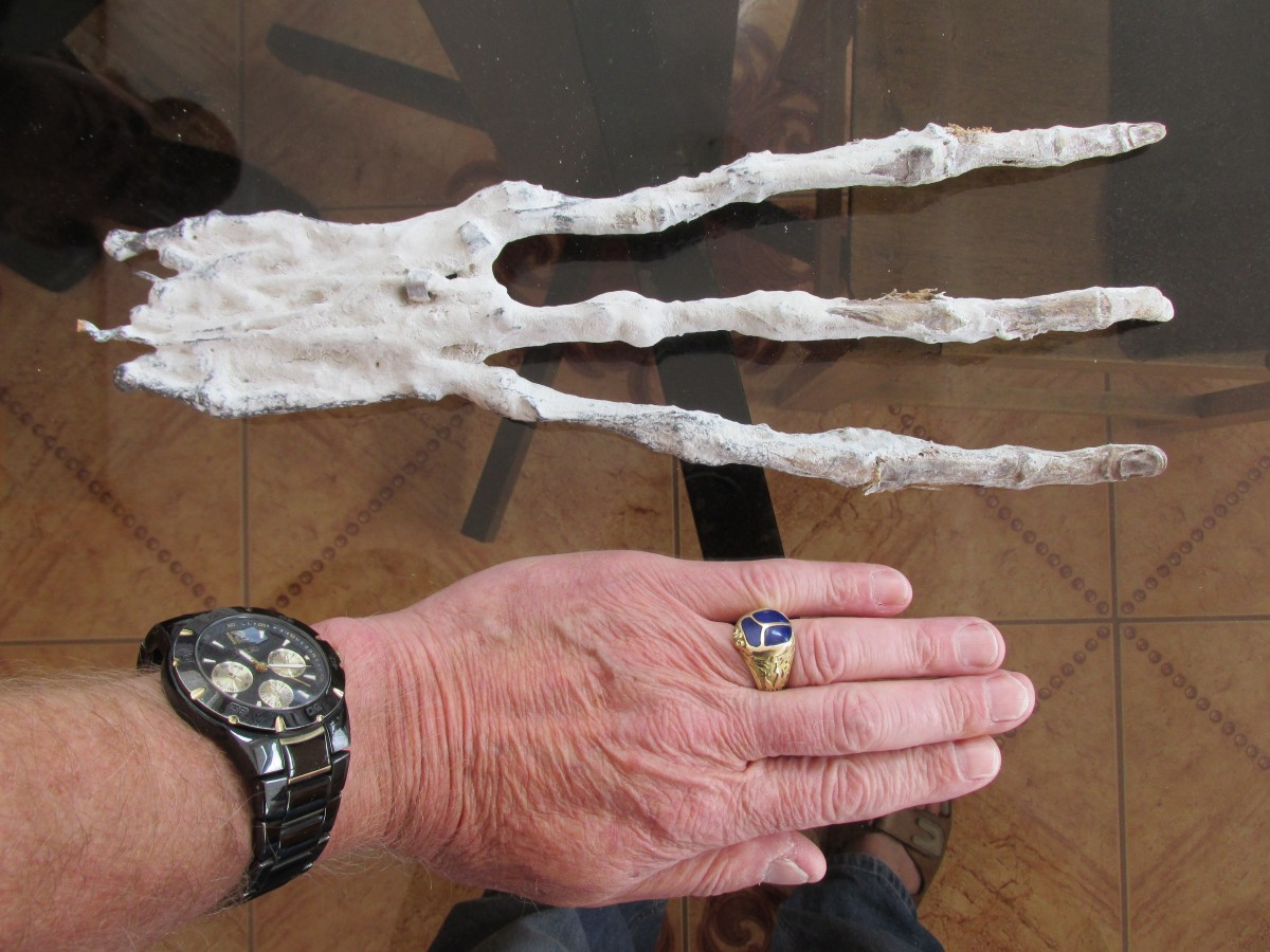 3 fingered mummy hand
