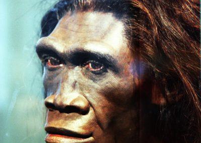 Homo Erectus Female